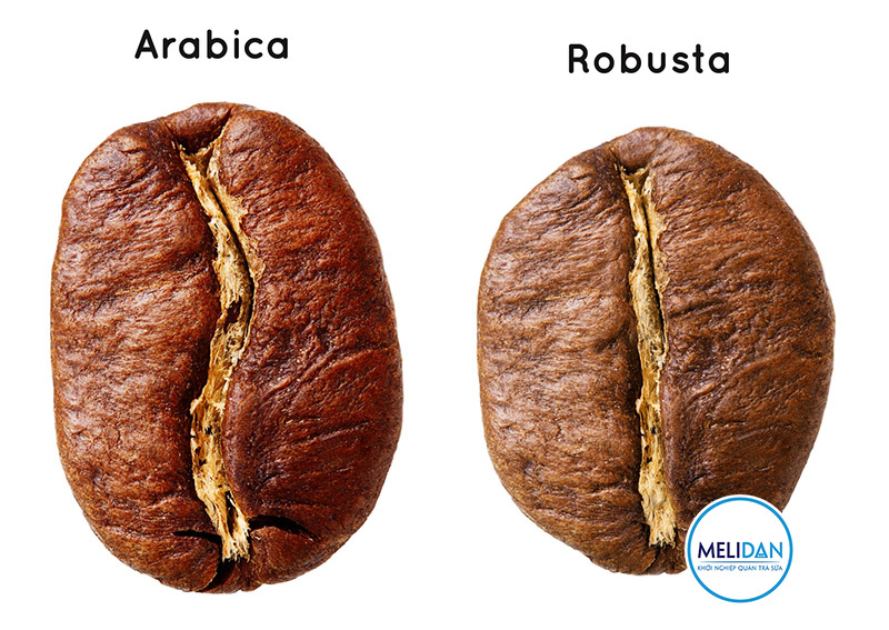 So-sánh-cà-phê-Arabica-và-Robusta