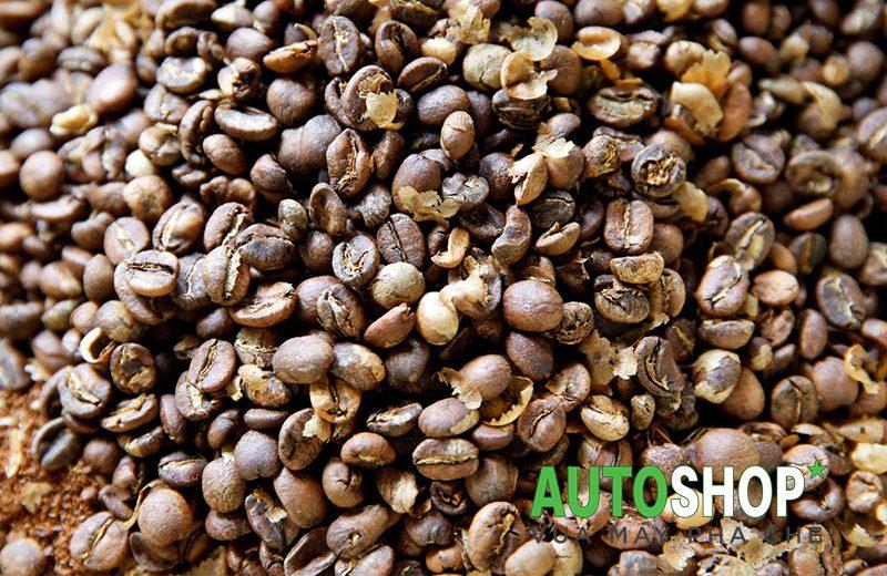 Quy-trình-thu-hoạch-cà-phê